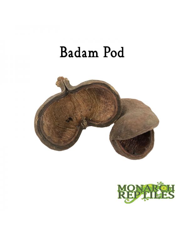 Badam Pods