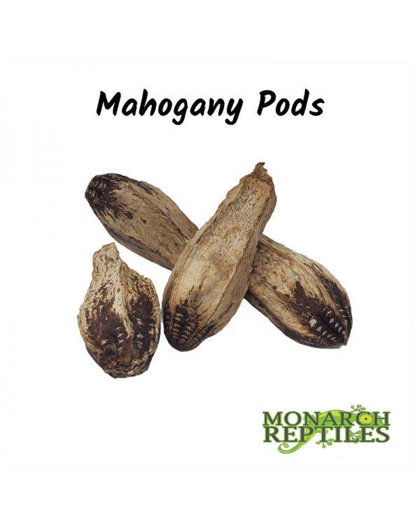 Mahogany Pods