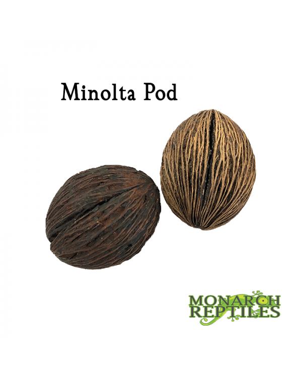 Minolta Pods