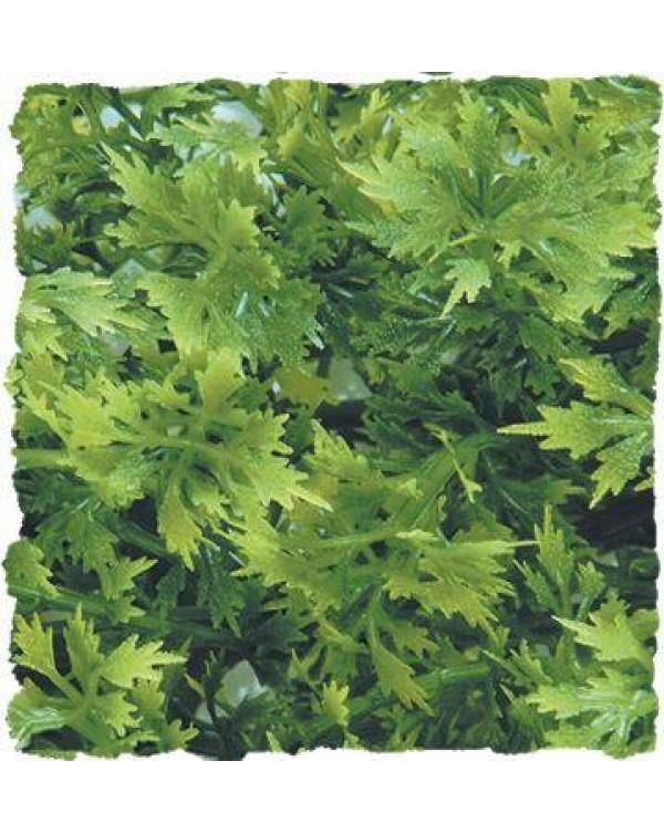 Zoomed Natural Bush Australian Maple