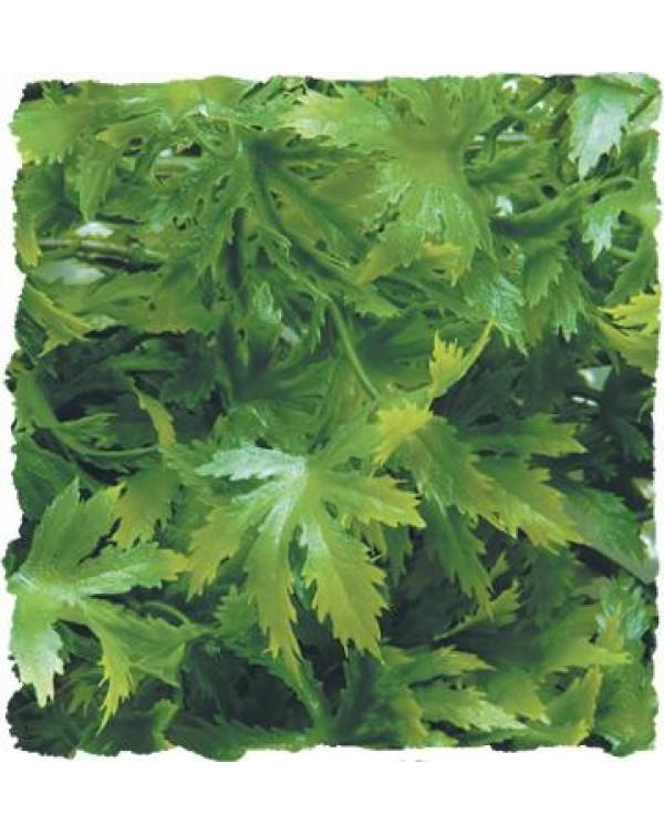 Zoomed Natural Bush Cannabis