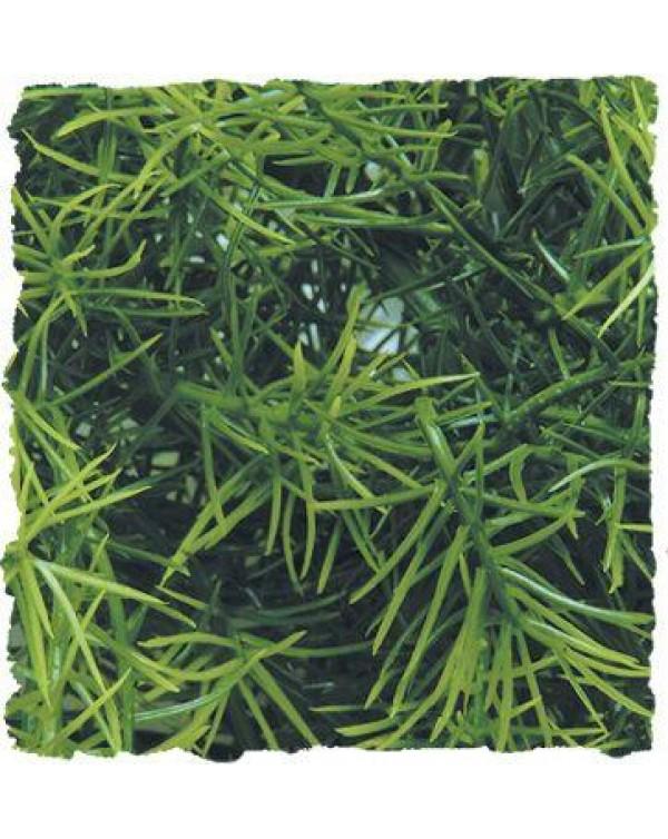 Zoomed Natural Bush Cashuarina